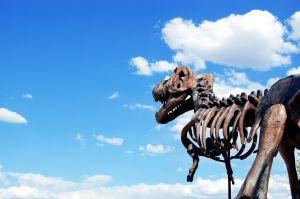 dinosaur-4-1018159-m
