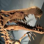 家族で国立科学博物館の恐竜博2016に行った帰りに、カッコ悪い大人になった自分。