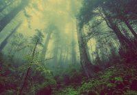無人の山中が木が倒れた時、音はするか?音波が音になり、音に目的と意味を加えてコミュニケーションになる。